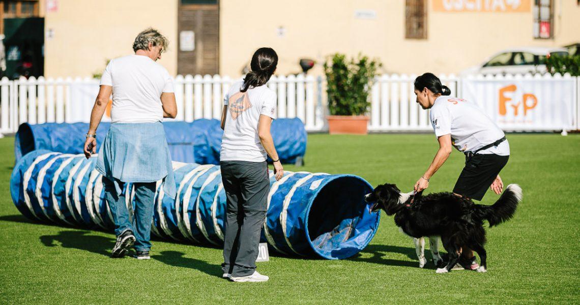 agility dog firenze