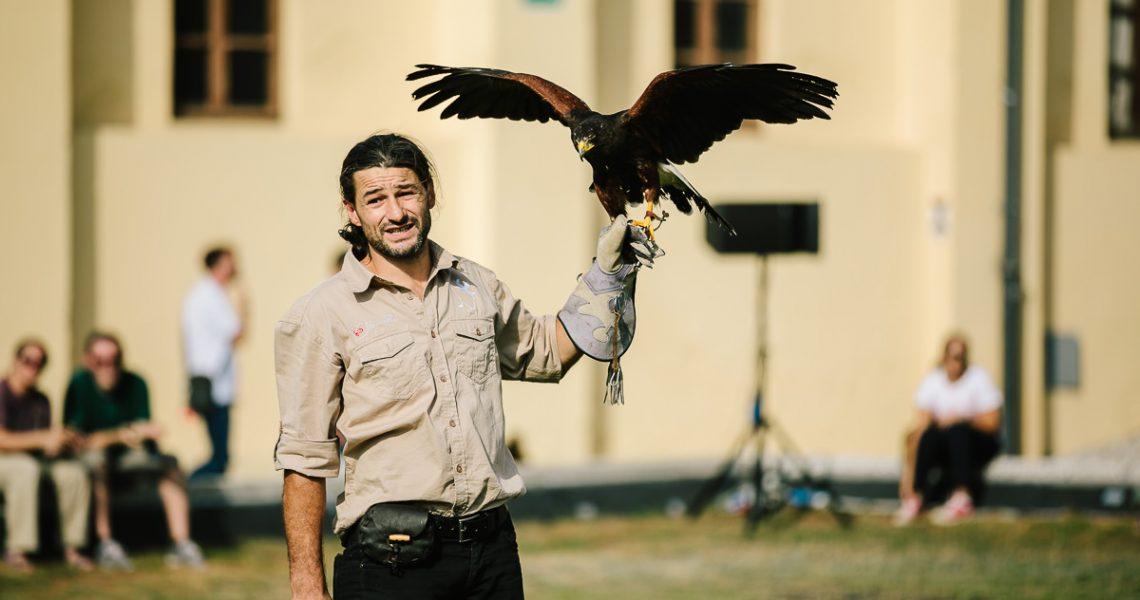 fyp firenze falconeria toscana