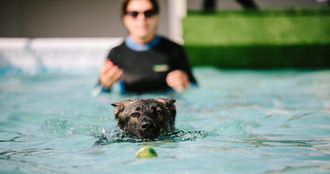 piscina cani firenze salvataggio